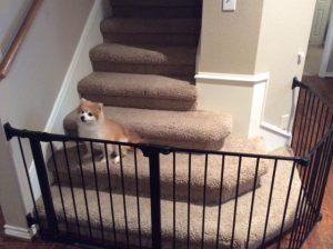 Puppy Proofing - Custom Fit Dog Gate Installation - Austin - Dallas Texas